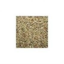 Cumin Seed (Jira) // 500 gm
