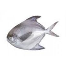 Silver Pomfret (Rupchanda) Regular // 1 kg