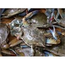 Sweet Crab // 1 kg