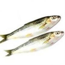 Tatkini Fish // 1 kg