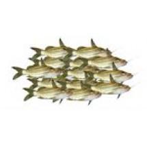 Tengra Fish // 1 kg
